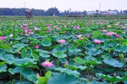 phuongvan